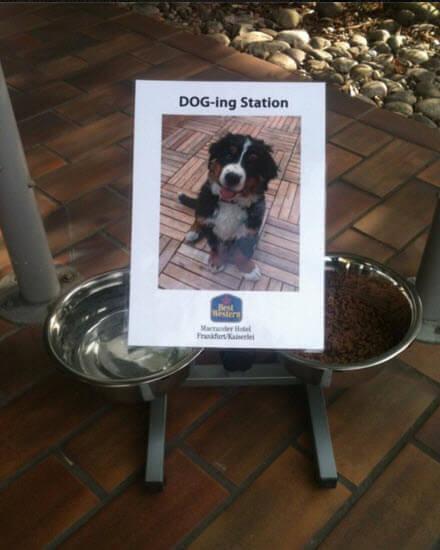 DOG-ing Station/ Quelle: www.facebook.com/BestWesternMacranderHotelFrankfurt
